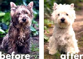 pic-before-after